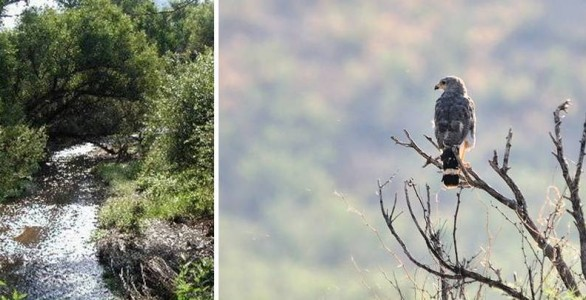 Sonoita Creek Preserve & Nature Conservatory