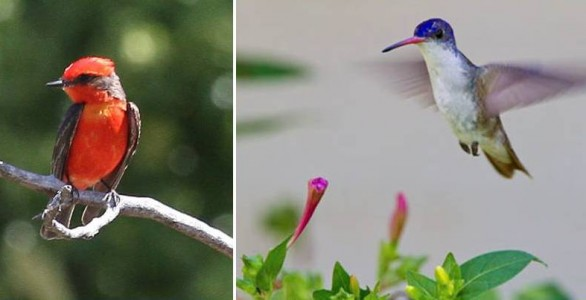 World-Class Birding