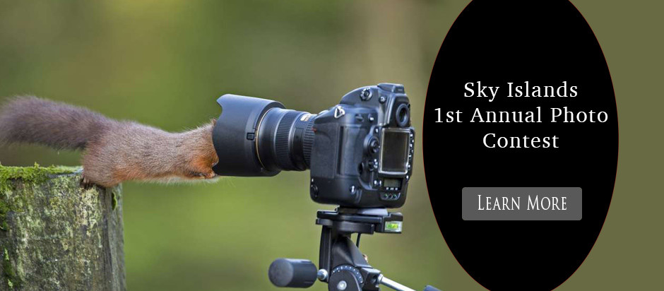 1st-annual-photo-contest